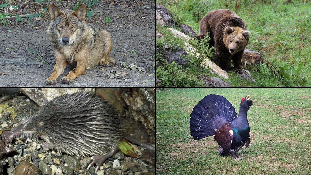 Especies amenazadas en Asturias