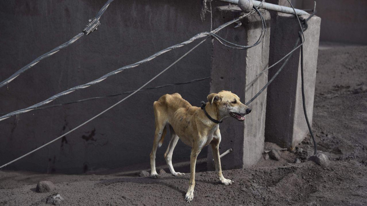 .Un perro atado por soldados durante las labores de rescate en la localidad de San Miguel Los Lotes, en Guatemala