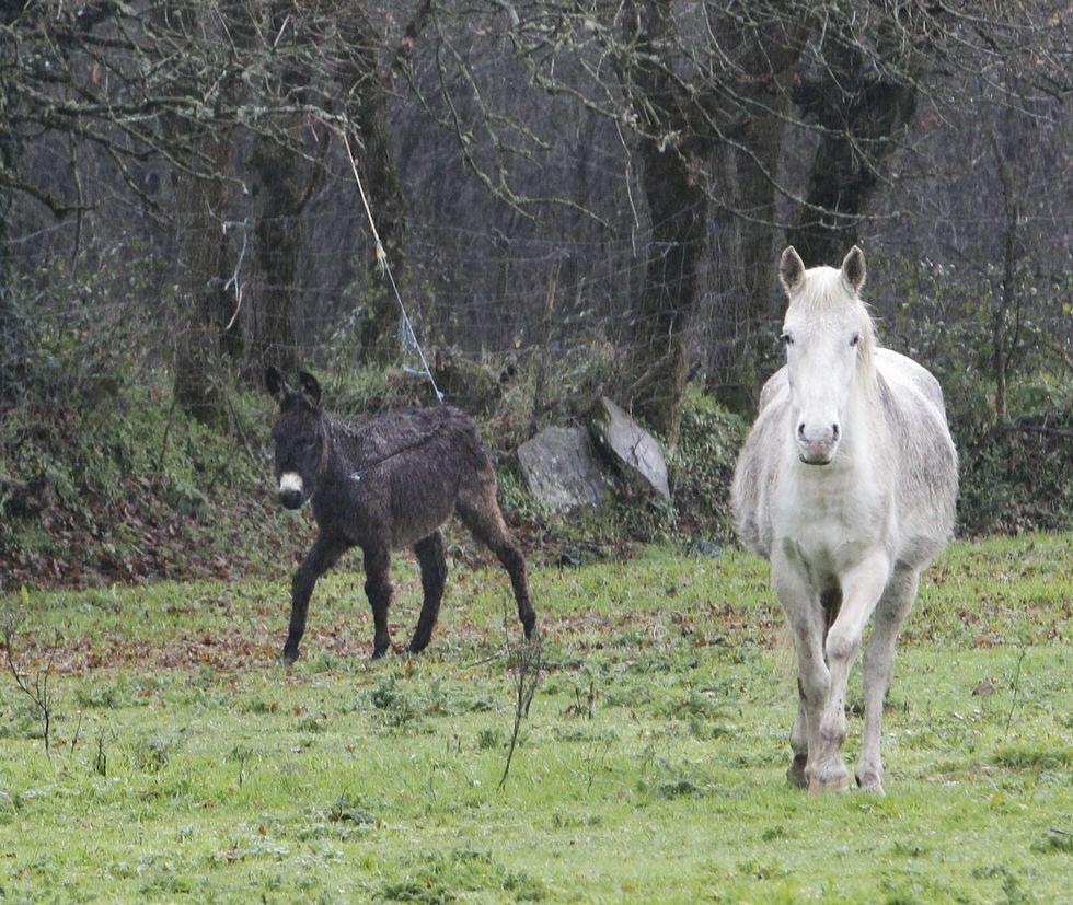 El burro y los dos caballos ya no están en esta finca. Los trasladaron a otra más escondida.