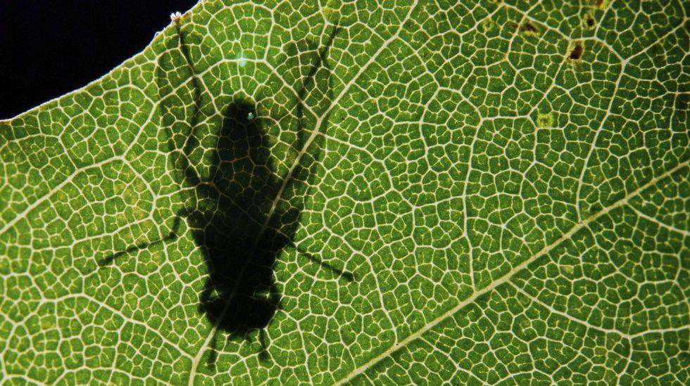 El niño de Boo que sueña con ser presidente. La sombra de una mosca se proyecta en una hoja al amanecer en Sehnde (Alemania)