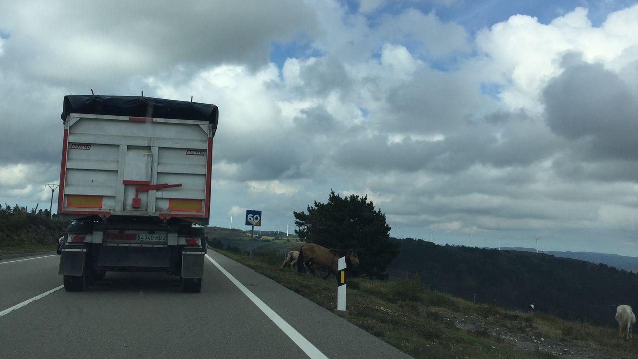 Los caballos irrumpen sin control en la carretera de As Pontes a Ortigueira.