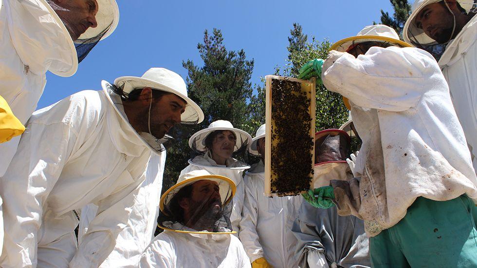 Alumnos en el curso de apicultura