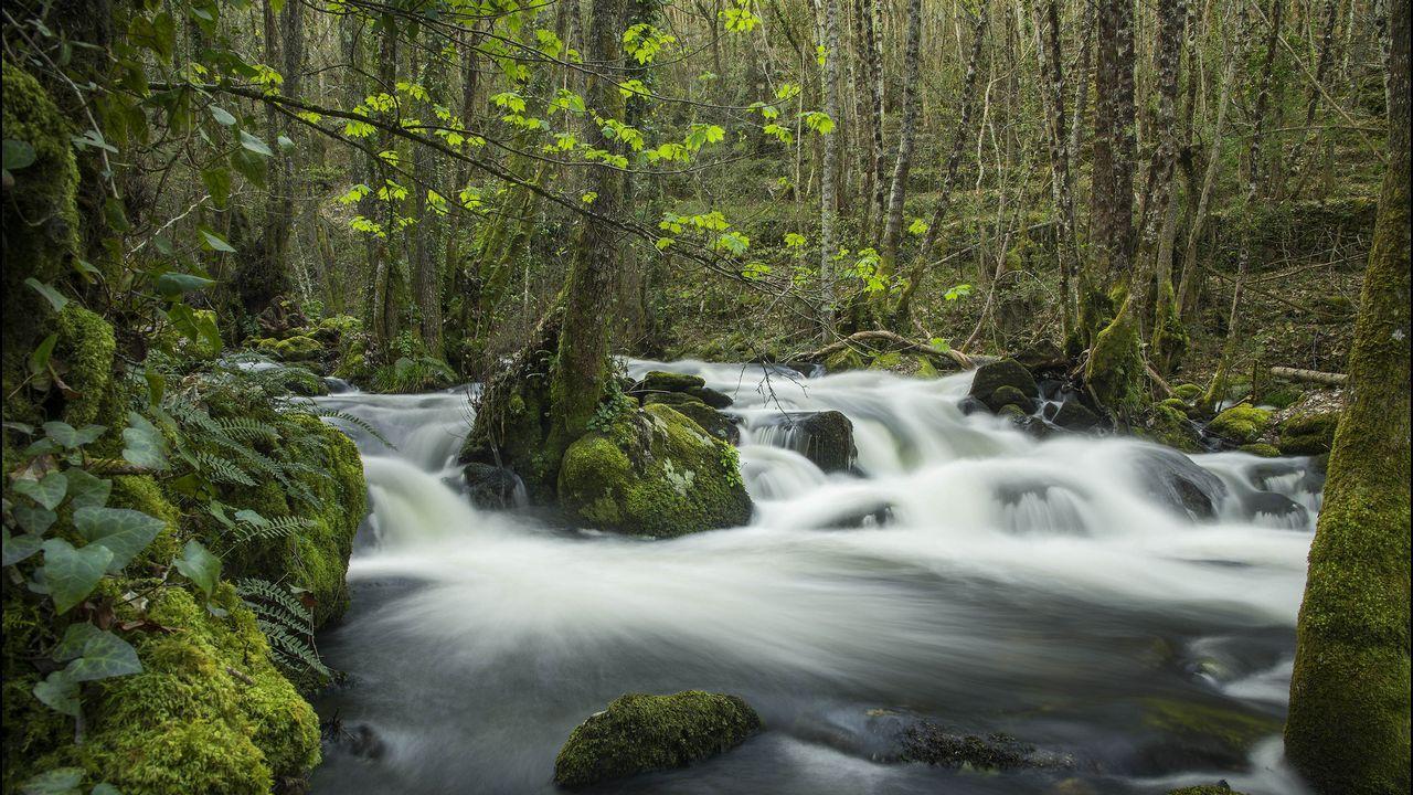 La ruta discurre en medio de una densa vegetación ribereña