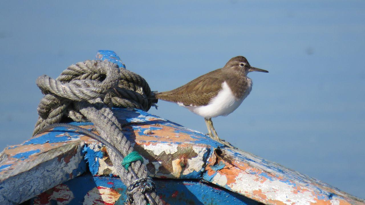 Las aves que pasan el invierno en Ferrol.