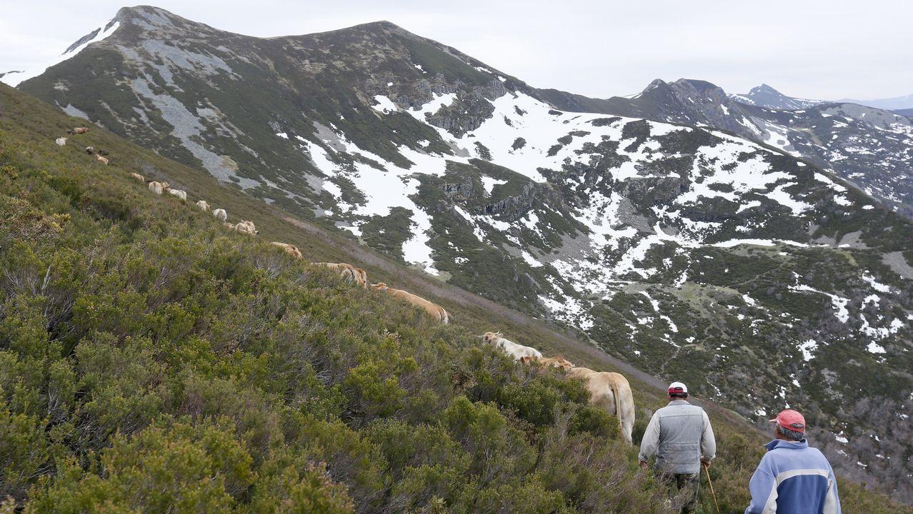 Los últimos trashumantes de Galicia.