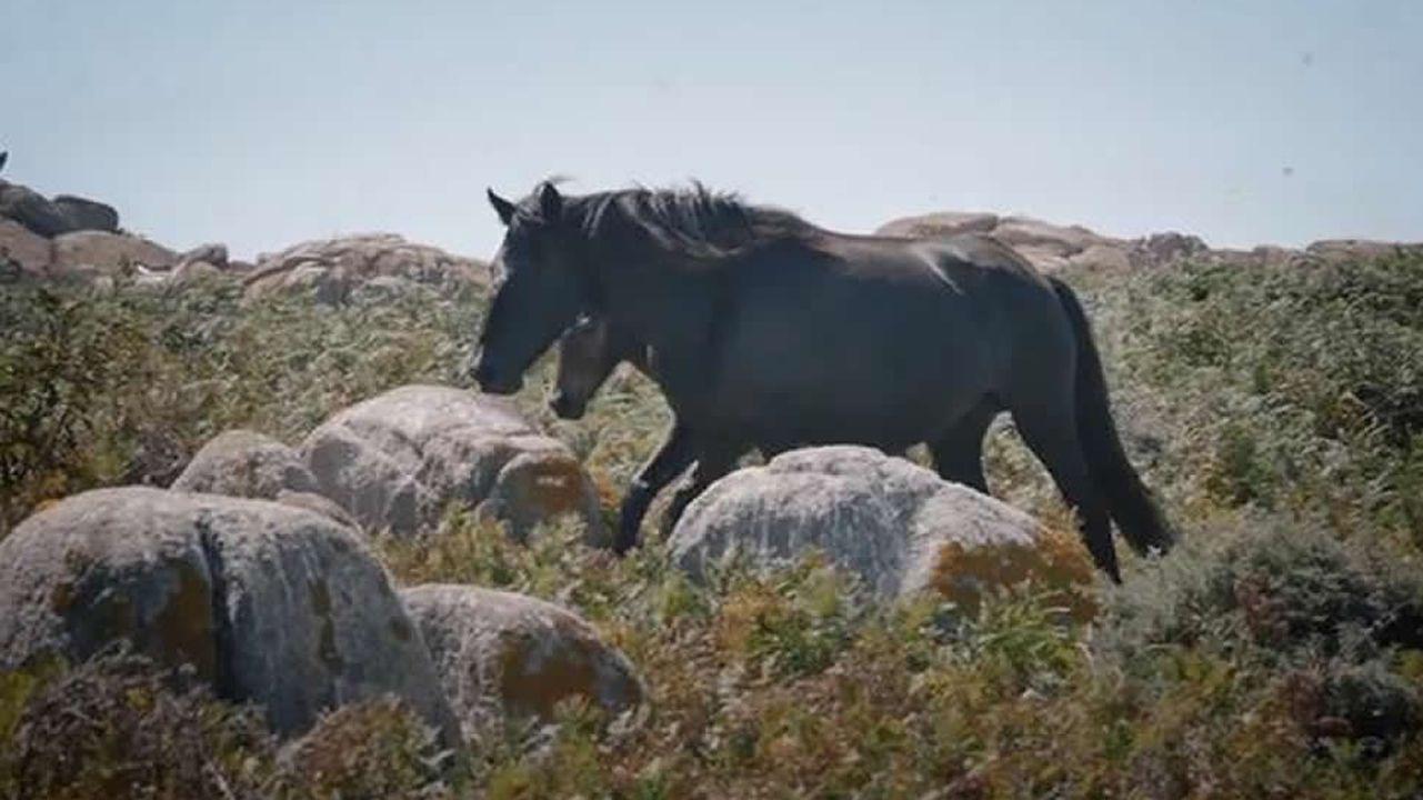 Sálvora, la isla de los caballos salvajes.