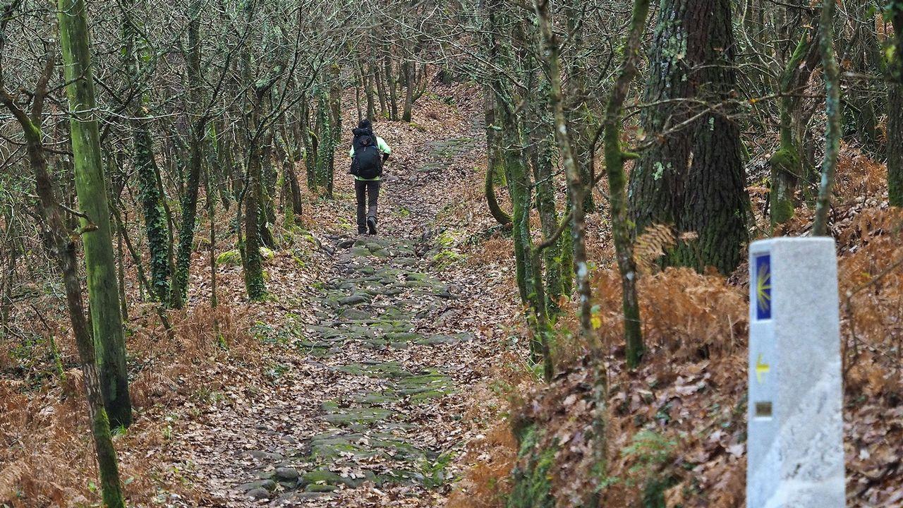 Chequeo a la etapa más popular del Camino Francés