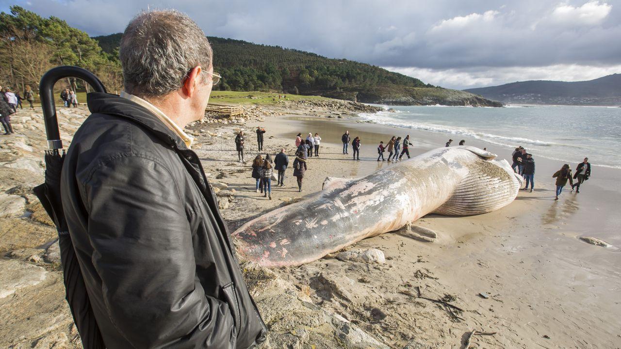 Varamiento, intento de retirada... las imágenes de la ballena de Balarés