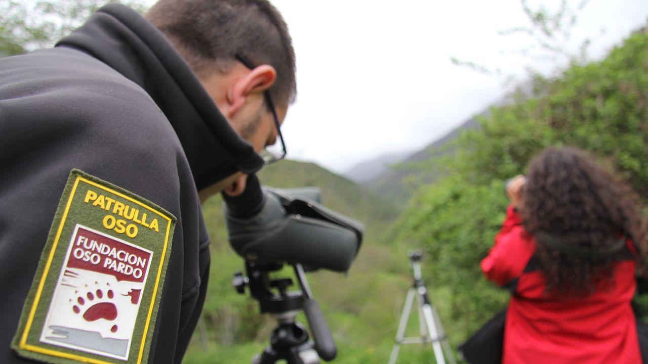 Observación oso pardo