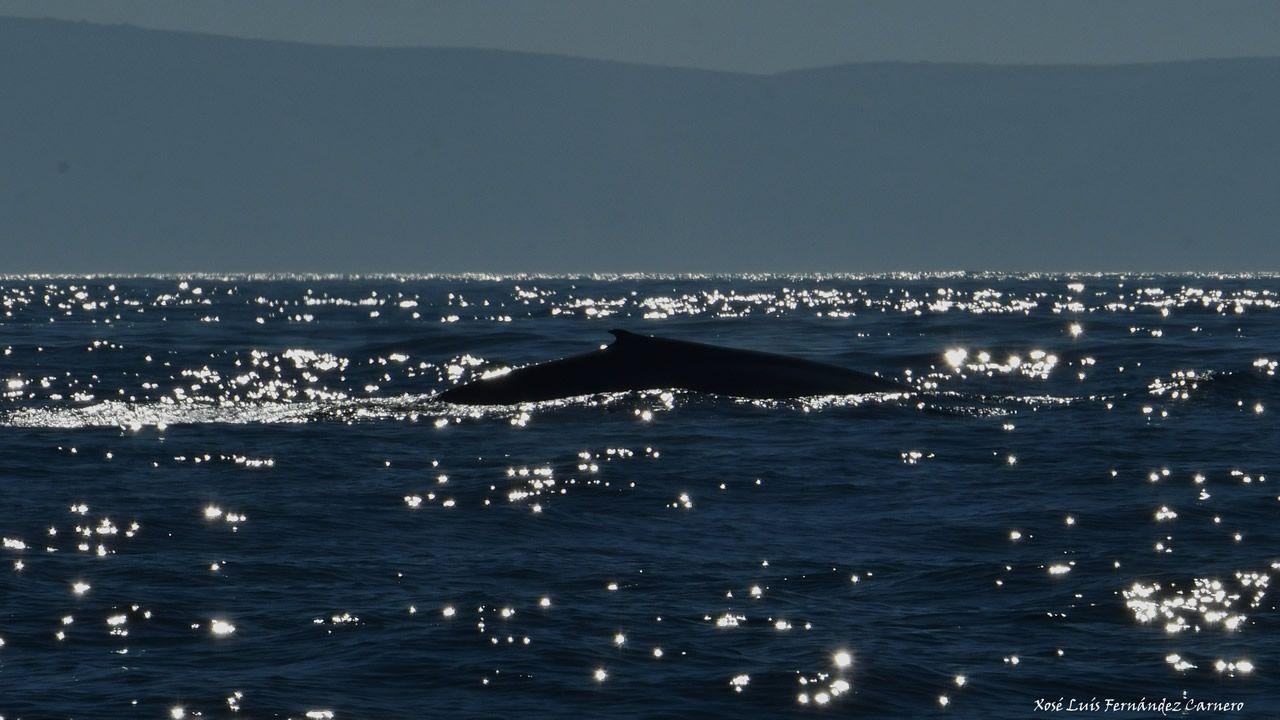 Dos ballenas azules, madre e hija, se dejan ver en Galicia.