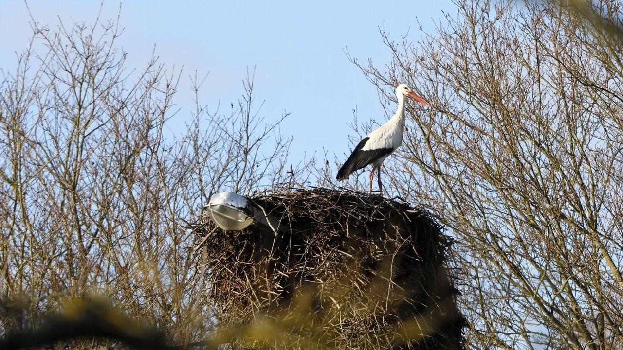 .Los inviernos cada vez más cálidos afectan a aves como las cigüeñas