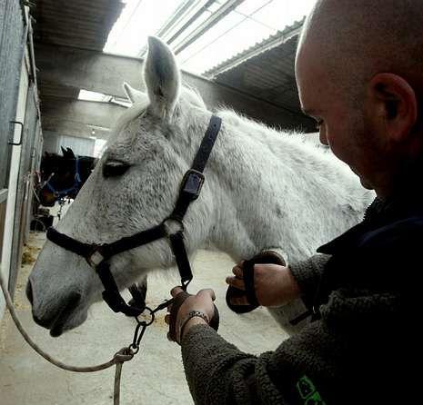 Un caballo recibe cuidados en la escuela de Vilamarín.