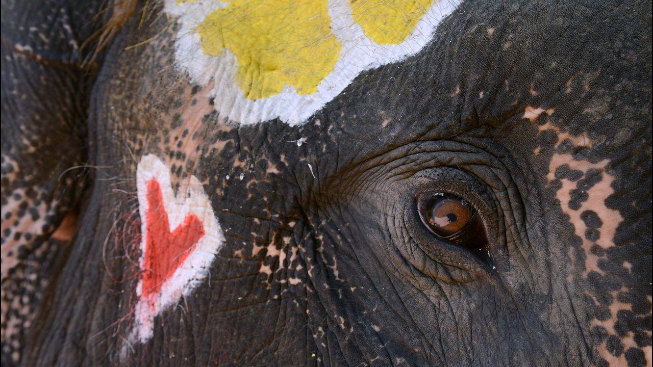Detalle del ojo de un elefante pintado, durante una ceremonia del Festival Songkran, en Tailandia