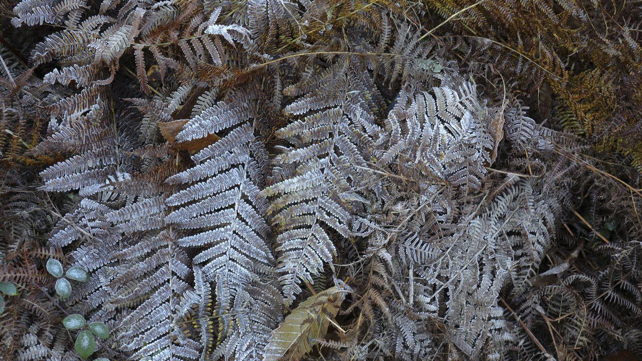 Preparados para los primeros copos de nieve del otoño