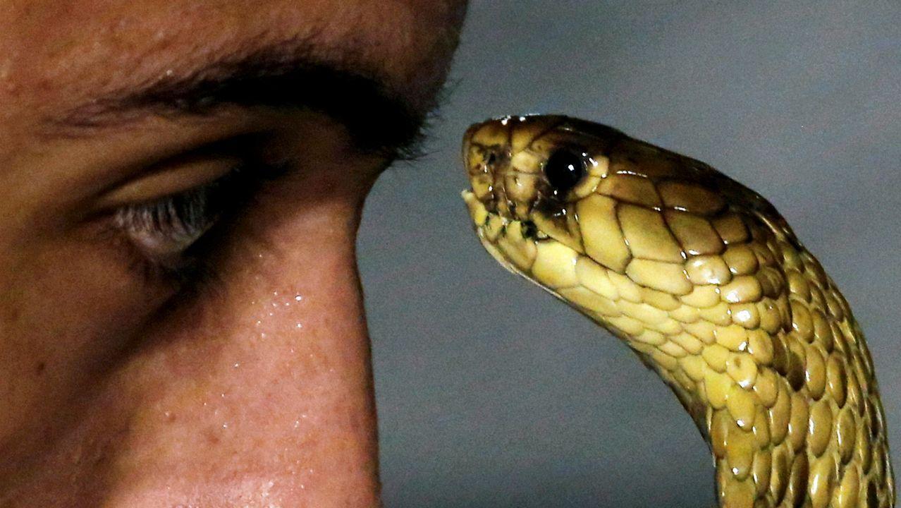Show en el Mar Rojo en el que un hombre mira a los ojos a una cobra