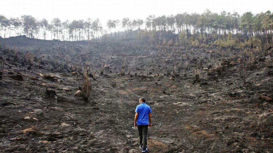Galiza, incendios: La Xunta admite que en As Fragas do Eume han ardido 750 hectáreas.  - Página 3 V17o7548