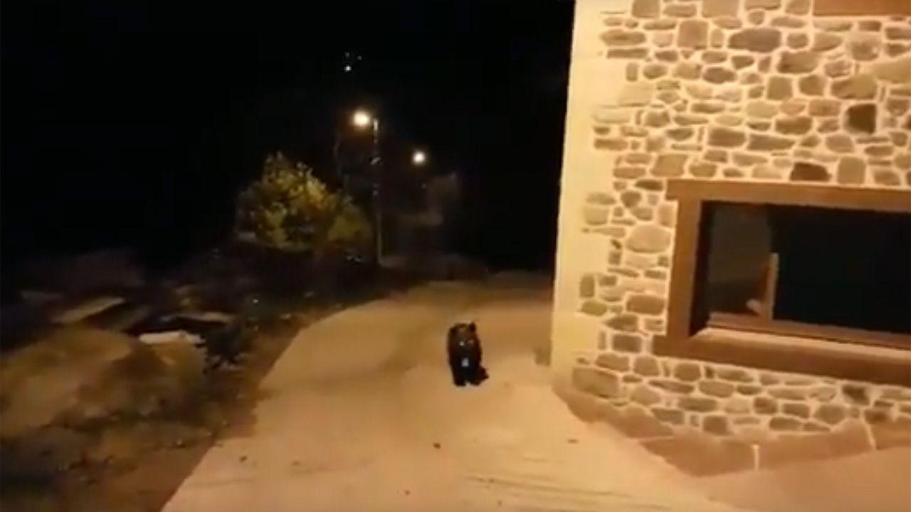 El esbardu perdido.