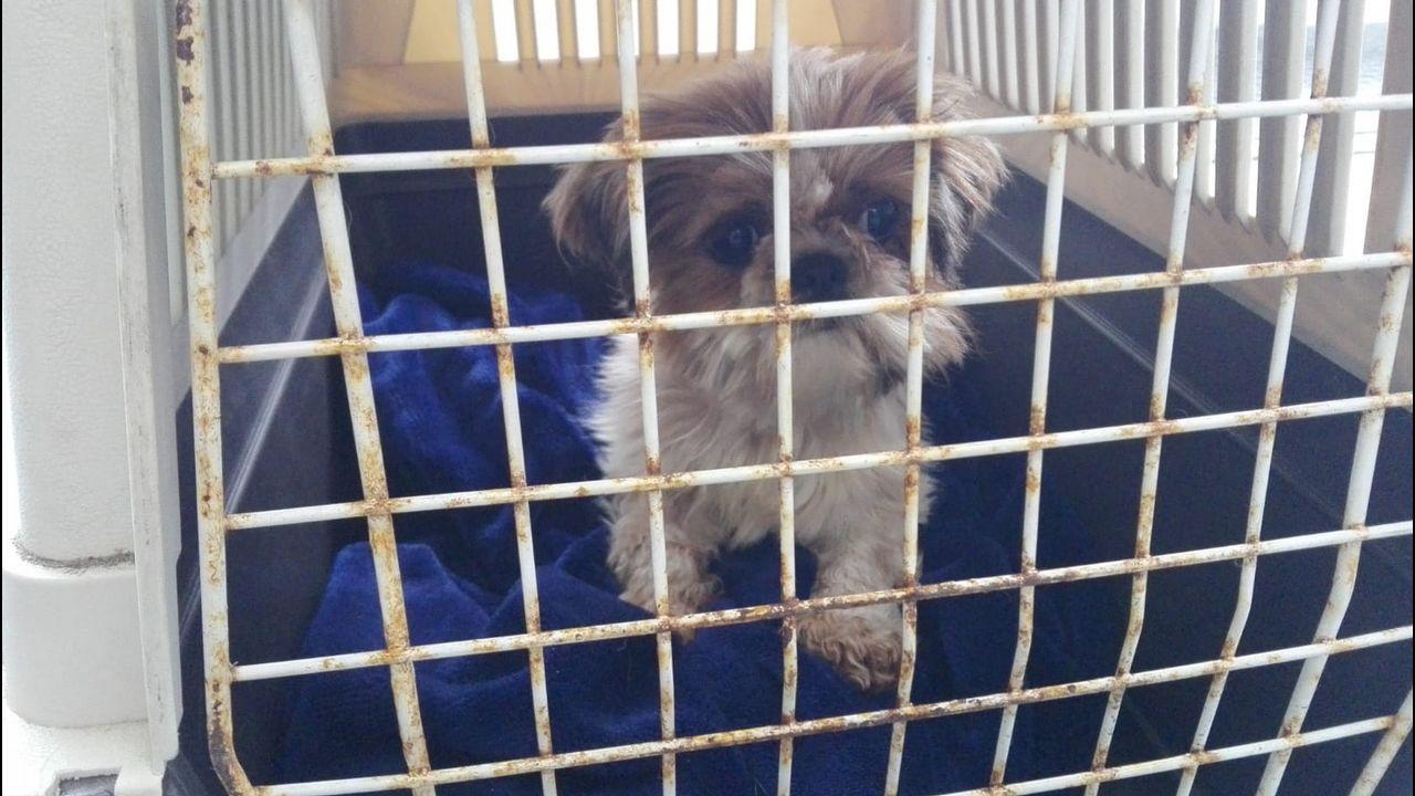 La protectora de Vilagarcía recibe 20 cachorros abandonados en una semana.Punto limpio