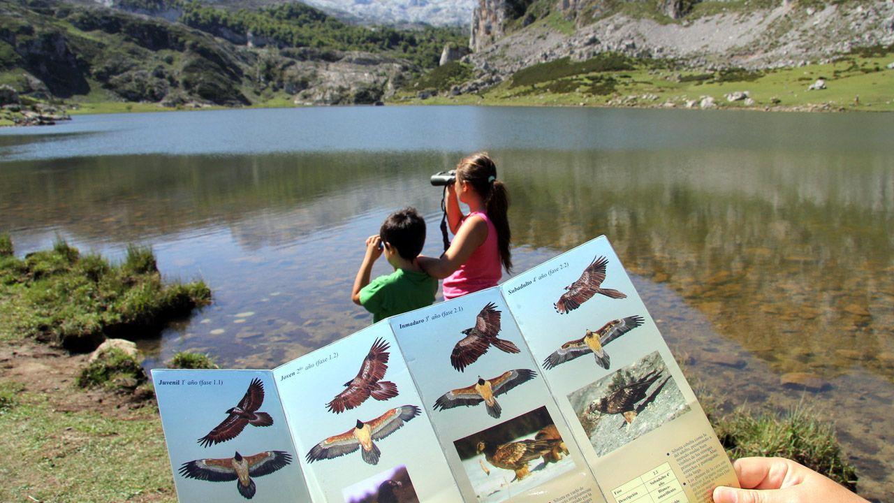 asturias, turistas, turismo de observación, turismo de naturaleza.Turistas observan el vuelo del quebrantahuesos