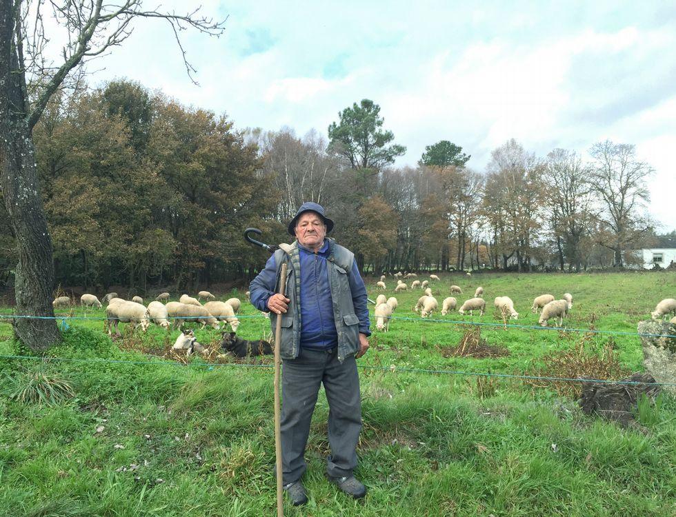 La búsqueda del joven de Láncara, en imágenes.Balbino, en una de sus fincas de Friol pastoreando con su rebaño de ovejas y alguna cabra.