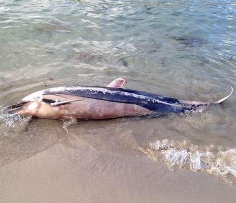 El delfín, en la orilla.