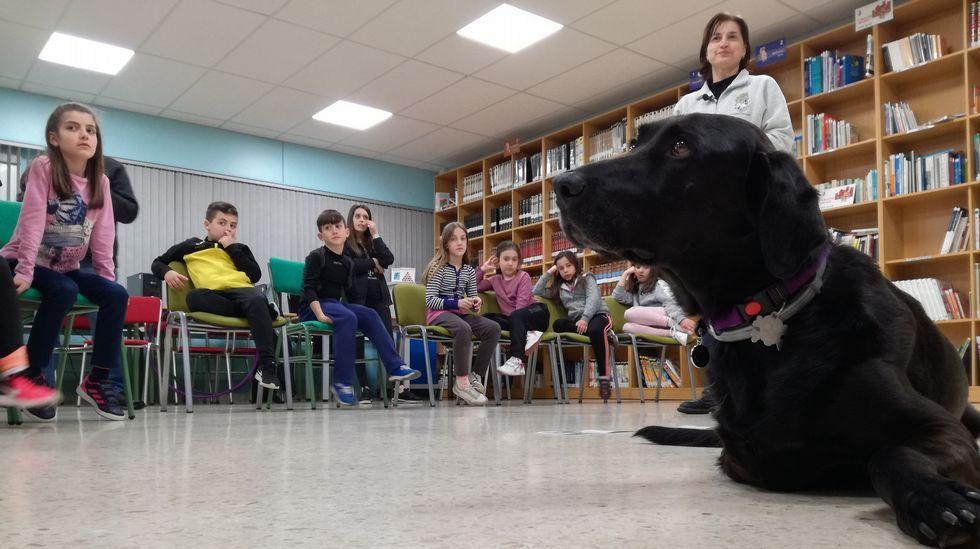 Connor, un profesor de apoyo sobre tres patas.