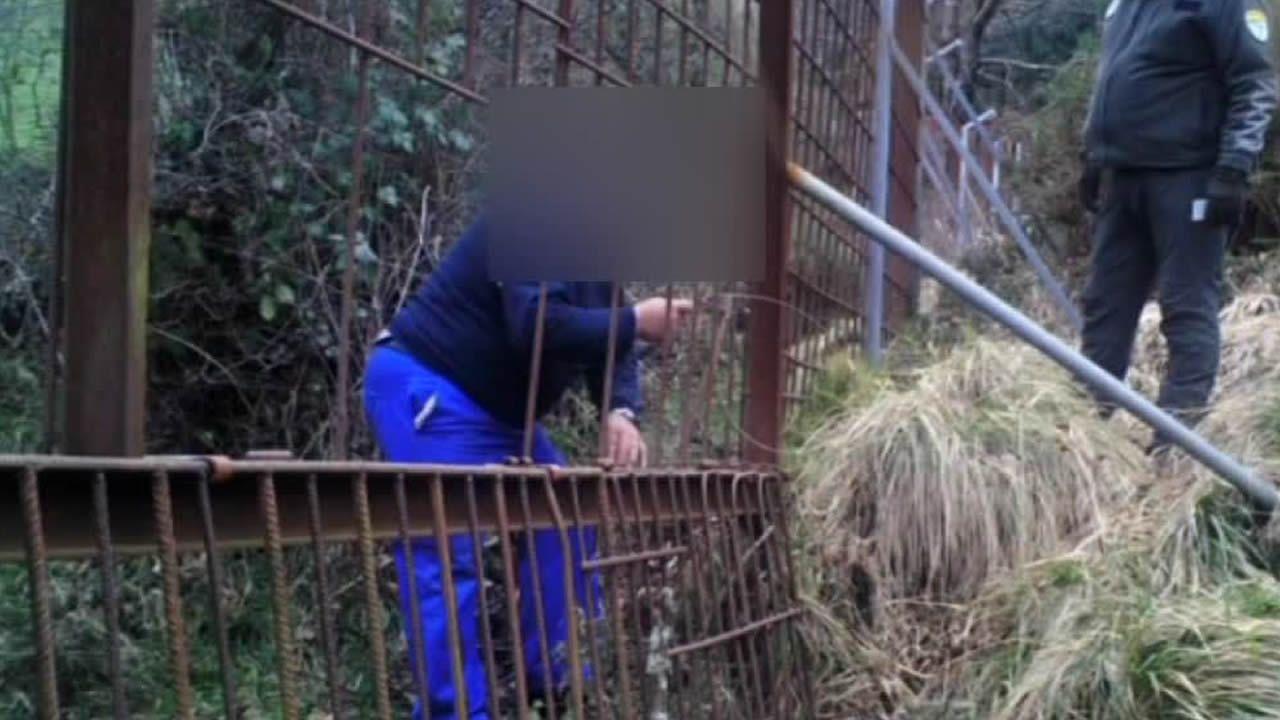 Así atraparon las cámaras a un furtivo.Un oso en una colmena