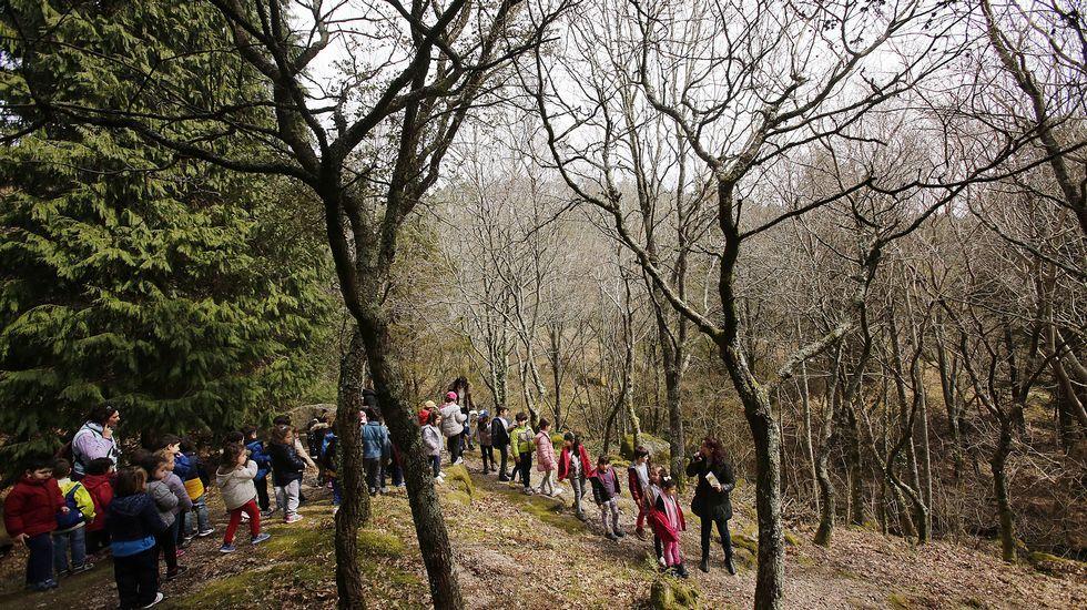 Alumnos del colegio de infantil y primaria A Cruz, de Nigrán, en una salida al monte Aloia, en Tui, para realizar actividades relacionadas con Voz Natura
