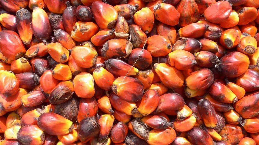 El aceite de palma, que se obtiene de la fruta de la palma aceitera, en crudo es una fuente de vitamina E