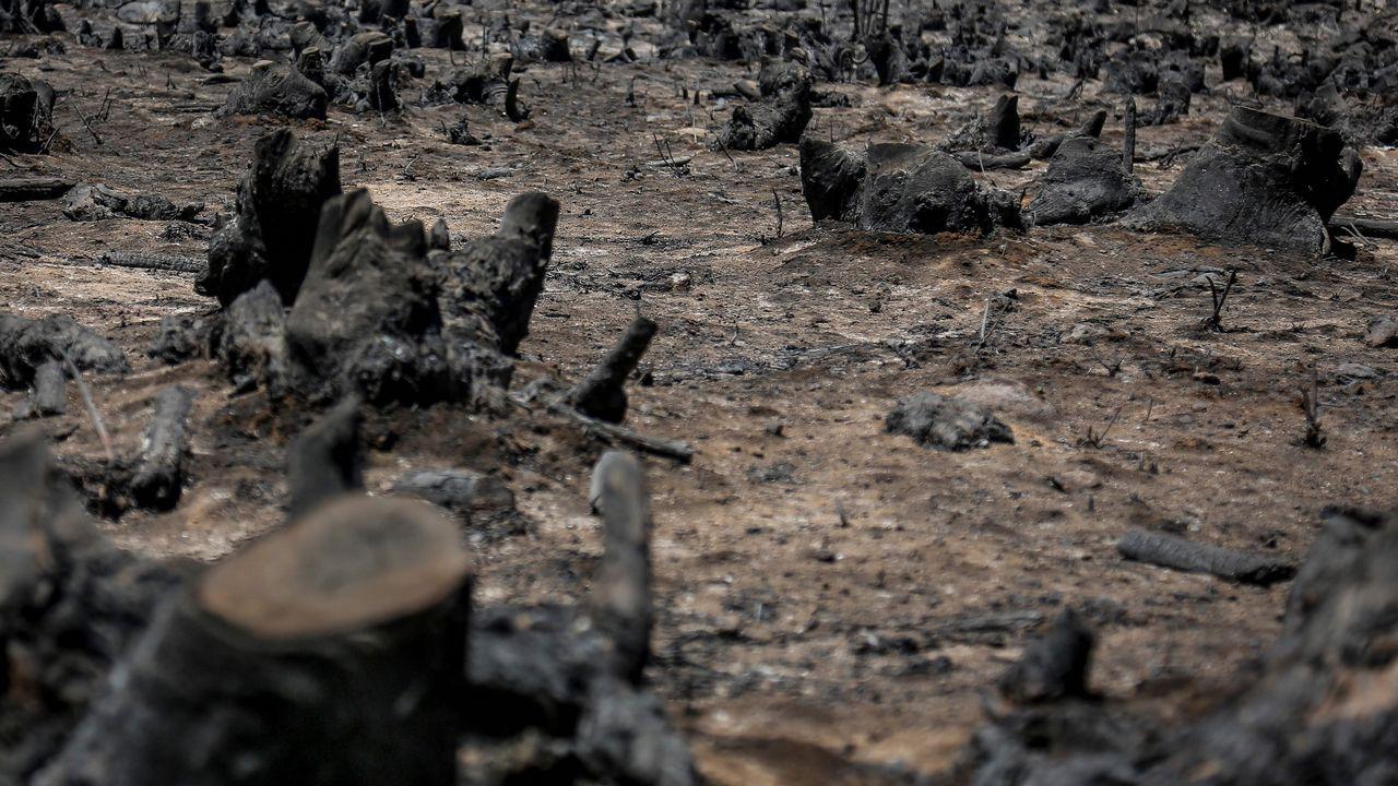 La virulencia del incendio ha recordado a muchos al de Pedrogão