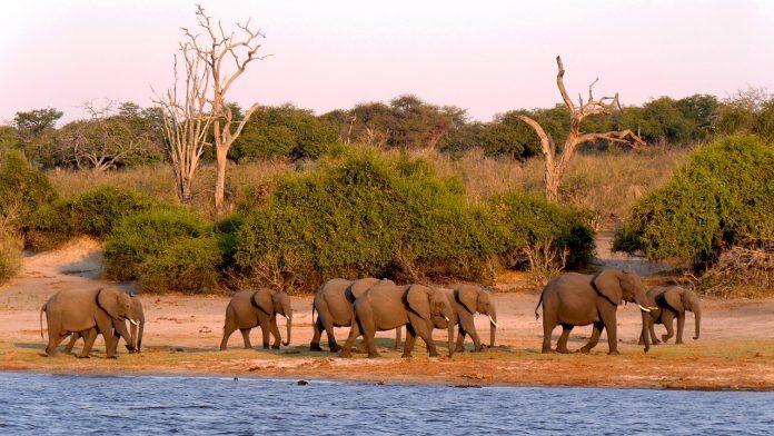 Parque Nacional de Chobe
