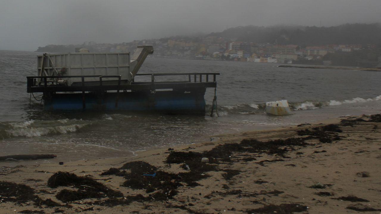 «Las playas de Galicia son más agradables que las del Caribe».Un delfín muerto en la playa de Verdicio