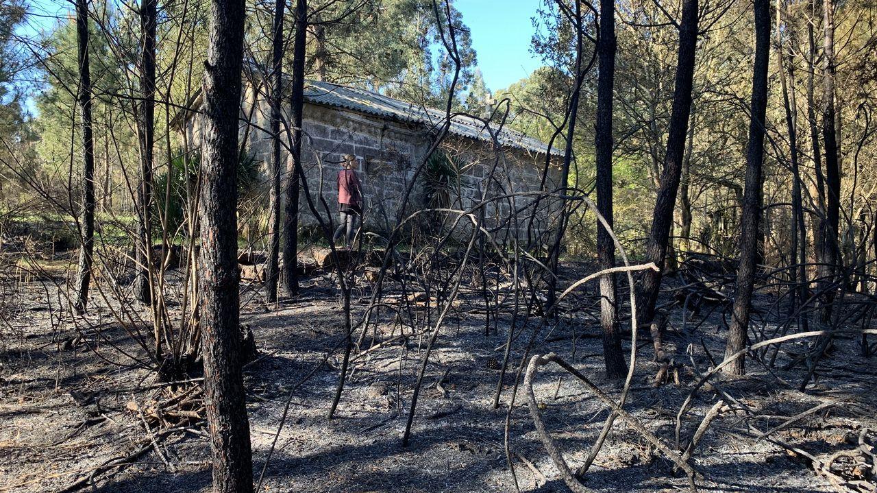 feira da educacion de ribeira.Zona de Rianxo devastada por el fuego, en el día después
