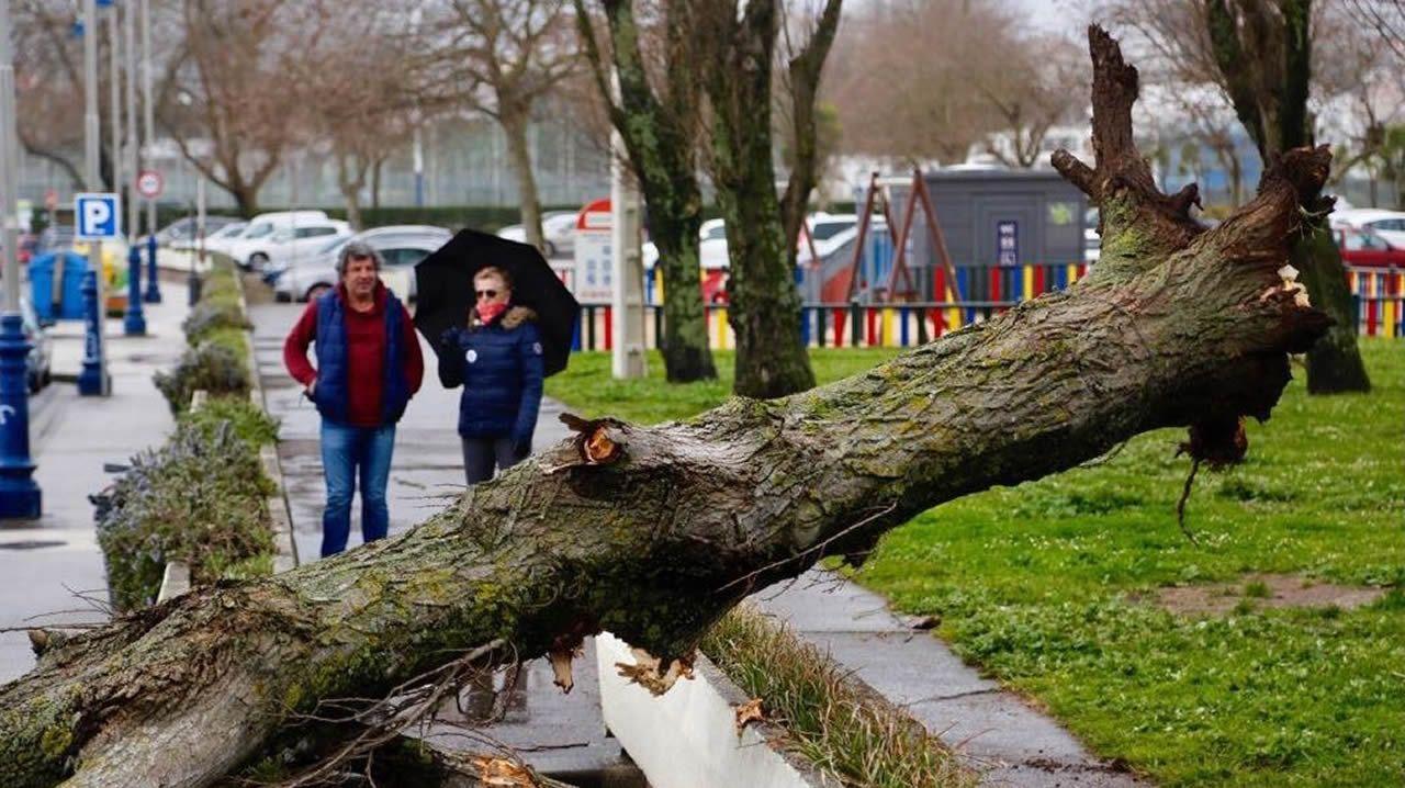 Una de las borrascas más intensas que afectó a Galicia durante el 2018 fue Félix con cientos de incidencias. En la imagen, un árbol derribado en Samil.