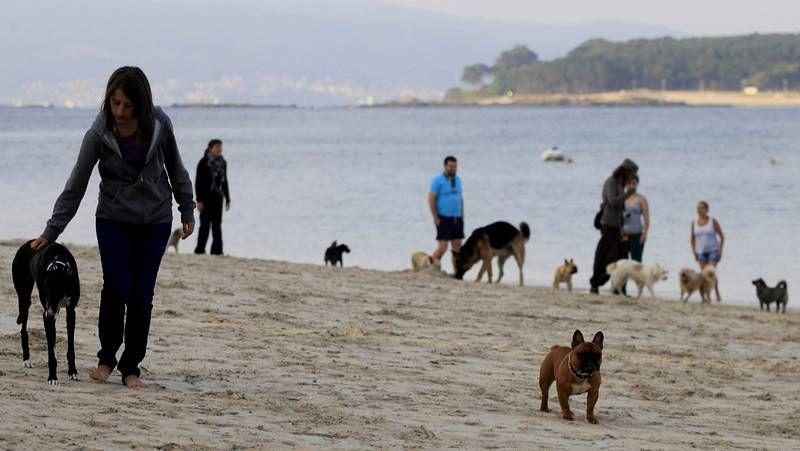 En la playa de Toralla de Vigo se pueden llevar perros provisionalmente a partir de las 8 de la tarde