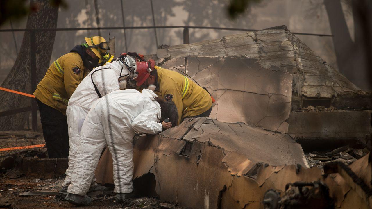 Inmobilizadas 153,5 toneladas de cigala sin garantías sanitarias