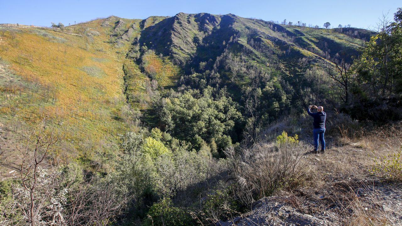En Cela, en la carretera de Degrada a Doiras, se puede ver cómo el monte se ha regenerado mejor que en otras zonas