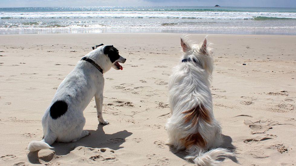 .Perros en la playa