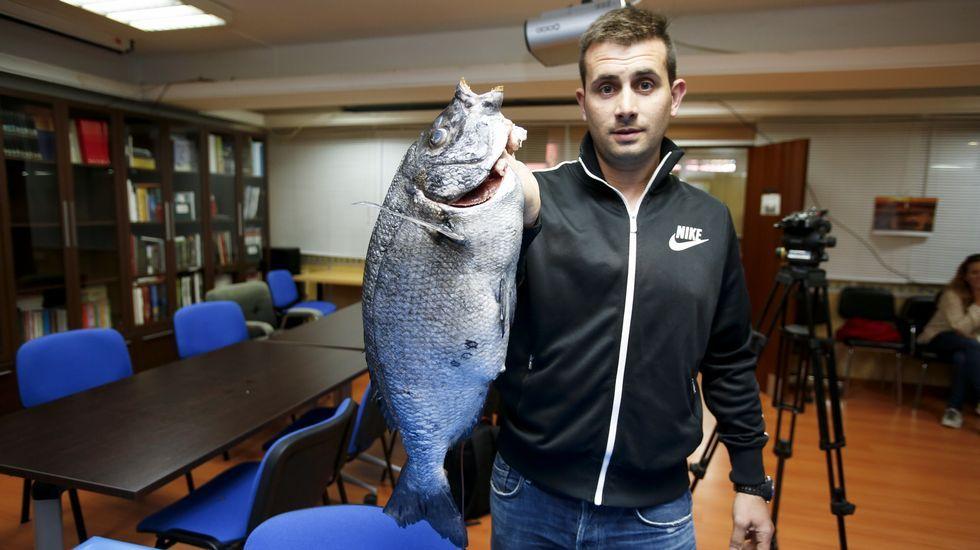Los candidatos de la comarca depositan su voto.Gerardo Martínez, ayer, con el sargo de 6,2 kilos, el más grande encontrado hasta ahora.