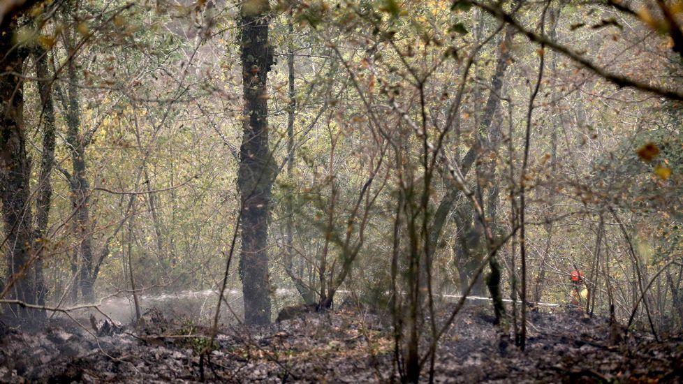 .Un bombero participa en las labores de extinción del incendio declarado en la Reserva de la Biosfera de Muniellos (Asturias), considerado como el robledal mayor y mejor conservado de España