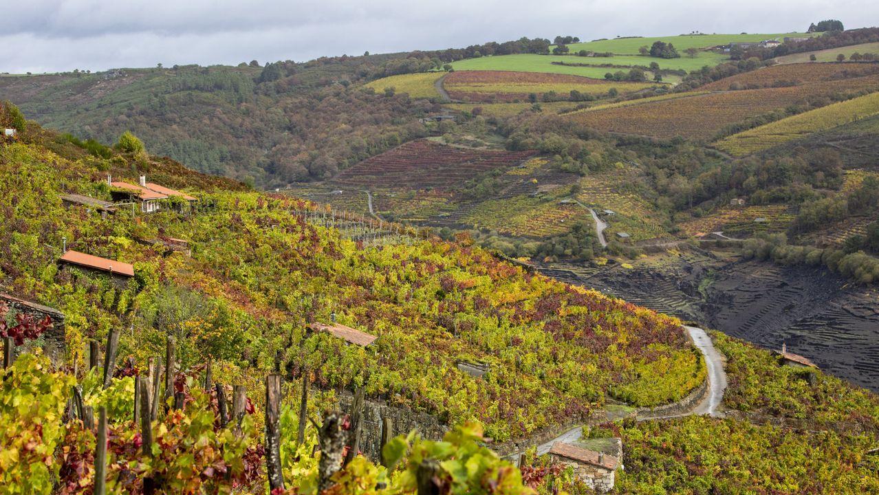Los viñedos de Sobrecedo, en Taboada