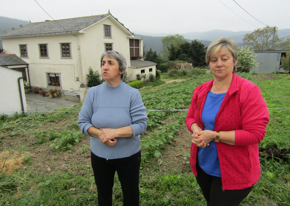 POLILLA GUATEMALTECA. Es la nueva plaga que ha llegado a Galicia y que pone en peligro la producción de patatas. Originaria de Guatema, llegó posiblemente desde Canarias.