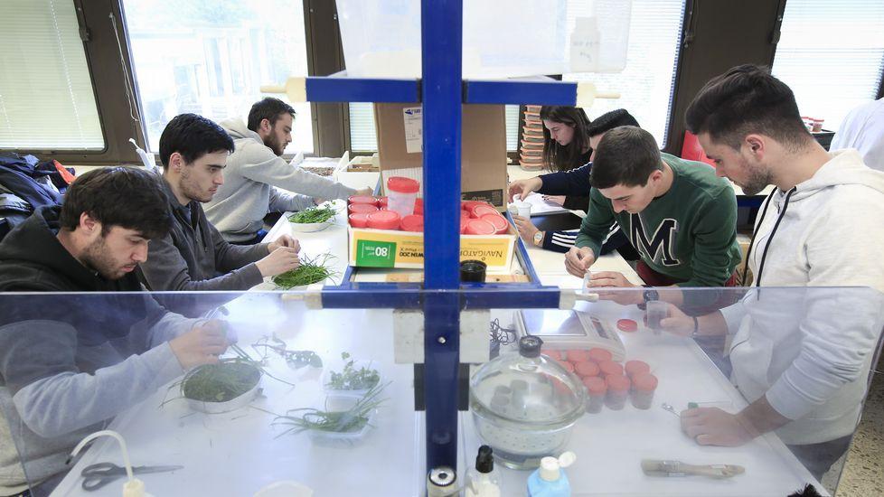 FP Innova, en imágenes.Los estudiantes de bachillerato invierten cientos de horas para preparar la selectividad