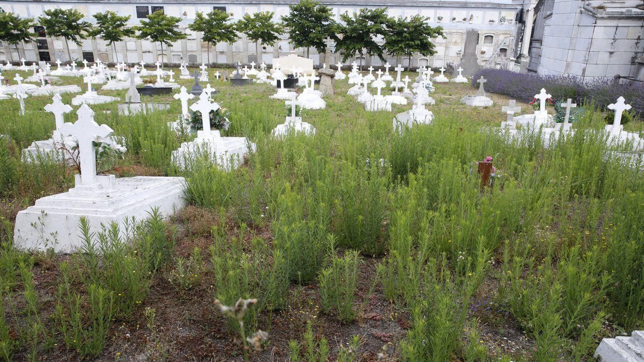 Abandono en le cementerio de San Amaro