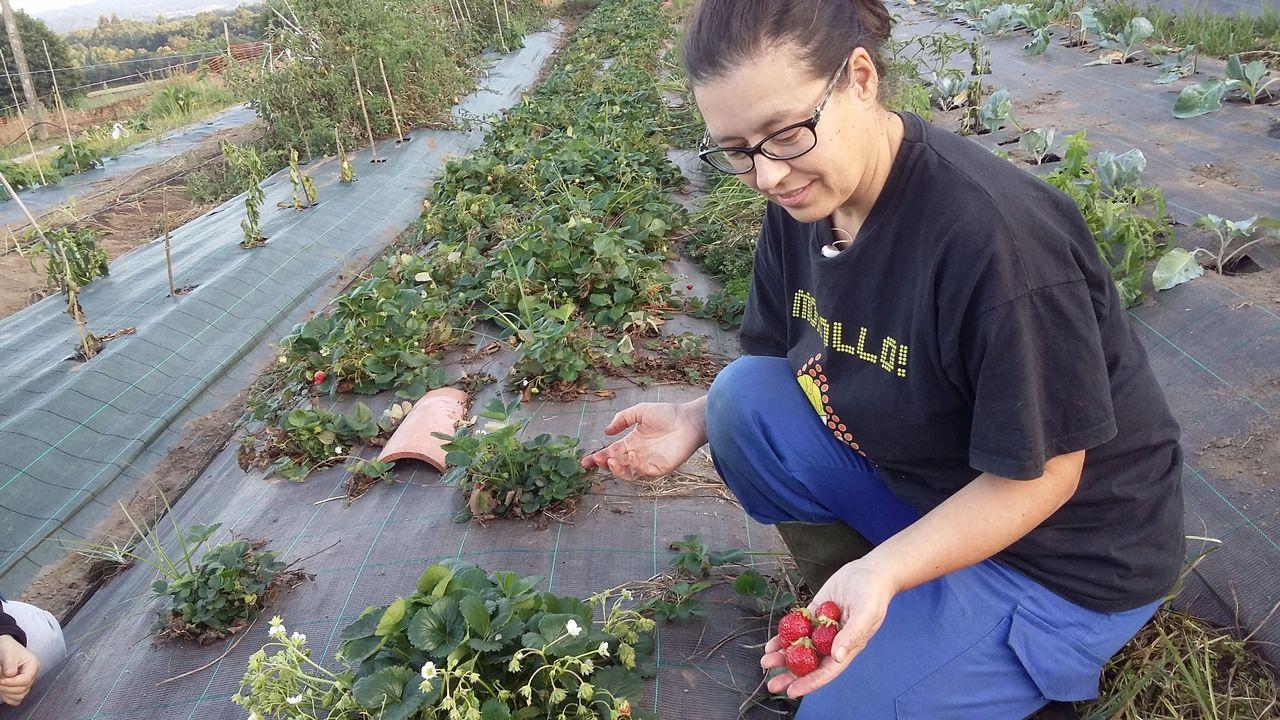La agricultura ecológica, de aniversario y en crecimiento.Begoña Sara Pena en O Casal, en el municipio de Bergondo.