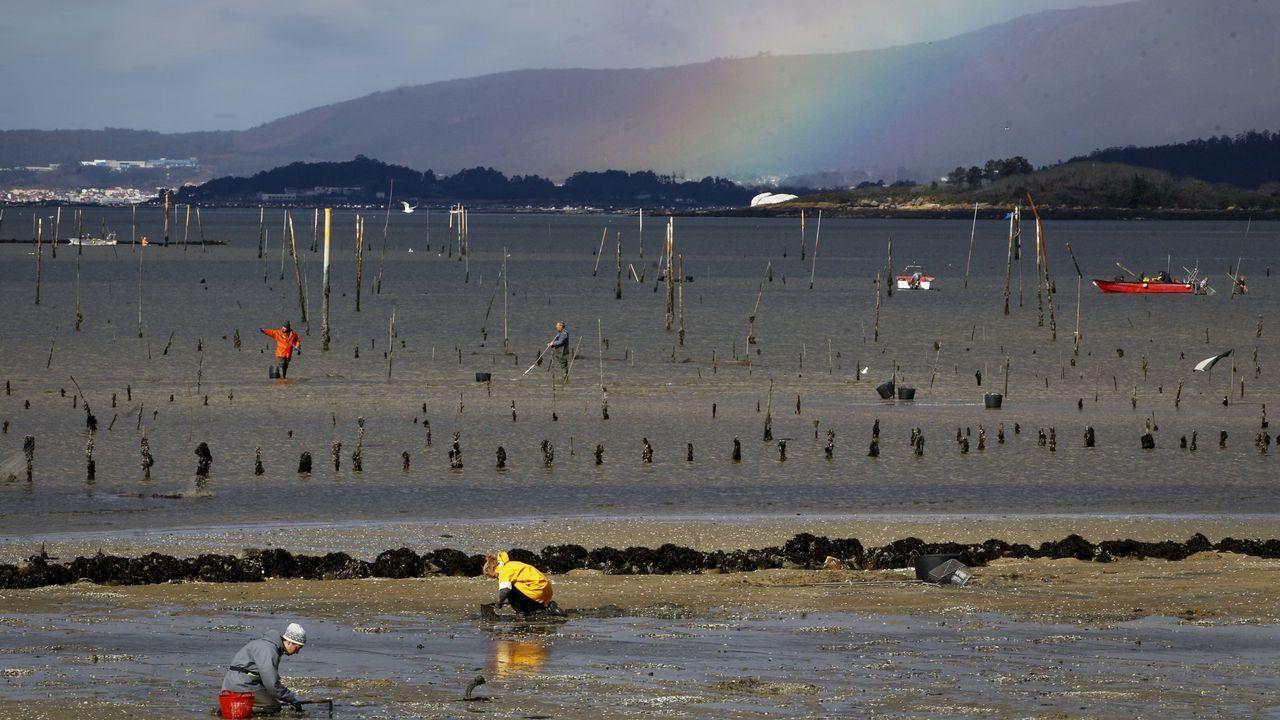 Vinculan esos casos de vibriosis al aumento de la temperatura de la superficie del mar en la costa gallega