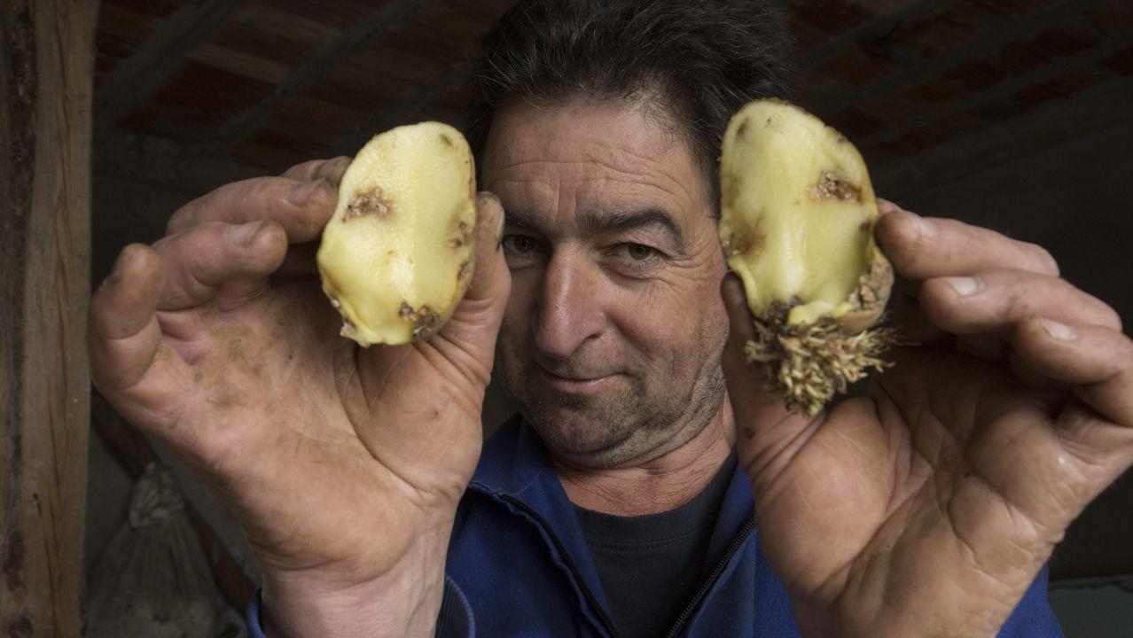 La detección de polilla de la patata en Muxía desata la alarma en toda la zona.