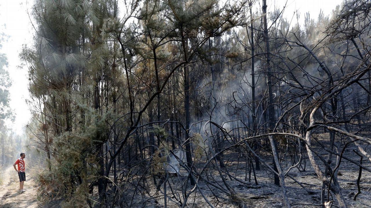 Vista aérea del incendio forestal que asoló el Parque Natural de las Fragas do Eume en el año 2012