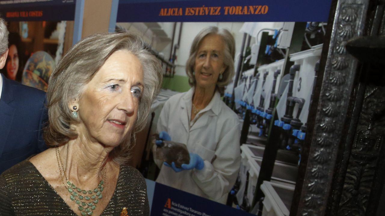 Siete colegios implantan el plan de robótica
