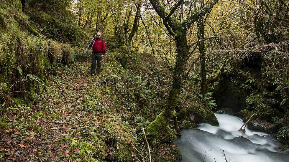 Tramo de camino en la Devesa das Reboleiras, un bosque de rebolo o  Quercus pyrenaica